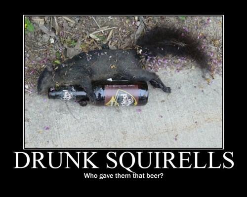 beer,drunk,funny,squirrels