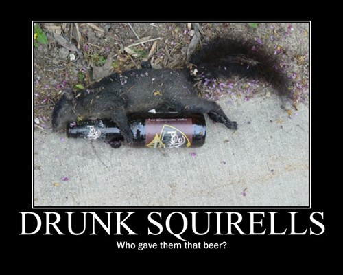 beer drunk funny squirrels - 7902512896