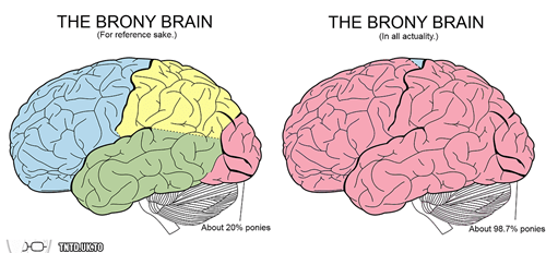 brony,brain,graphs