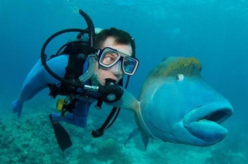 fish funny photography scuba - 7902665216