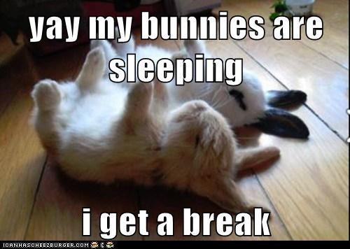 bunnies cute break sleeping - 7902686208