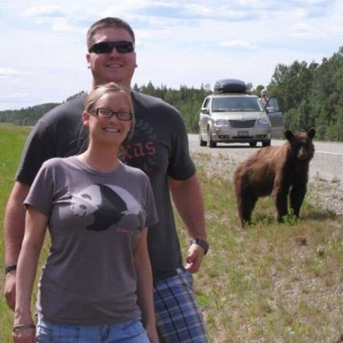 bears,photobomb