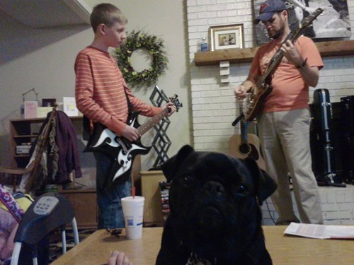 dogs,guitars,photobomb