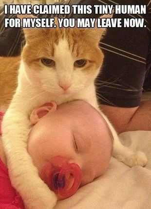 baby,Cats,human,mine,milk
