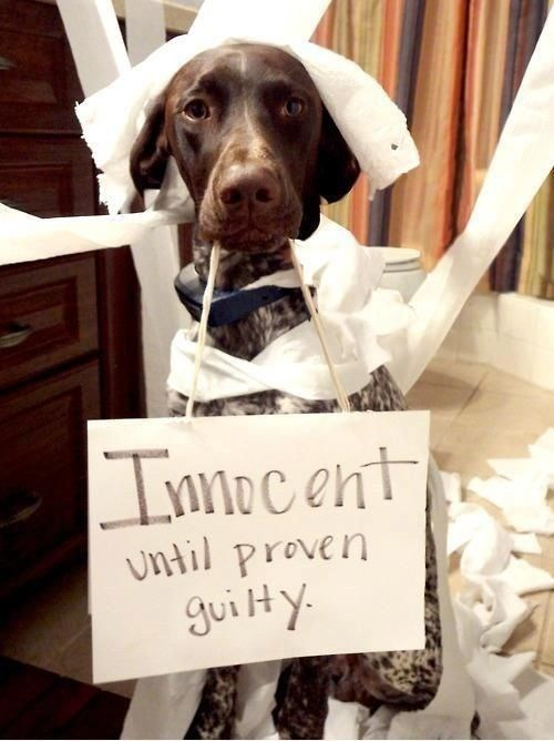dogs,innocent,toilet paper,pet shaming