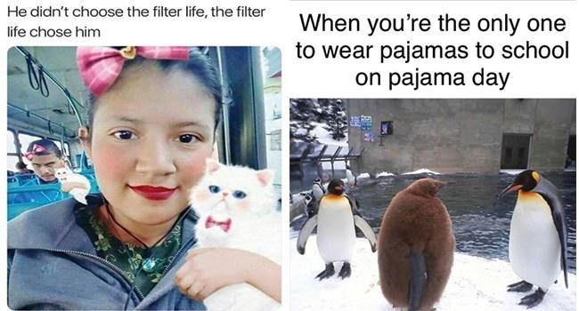 funny memes animal memes animals - 7904773