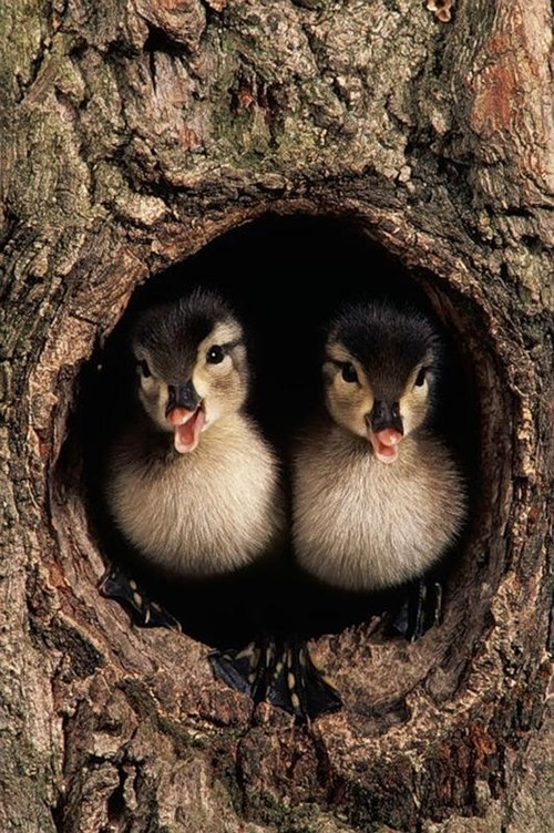 Babies trees birds ducks cute