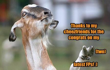 Cheezburger Image 7905204736