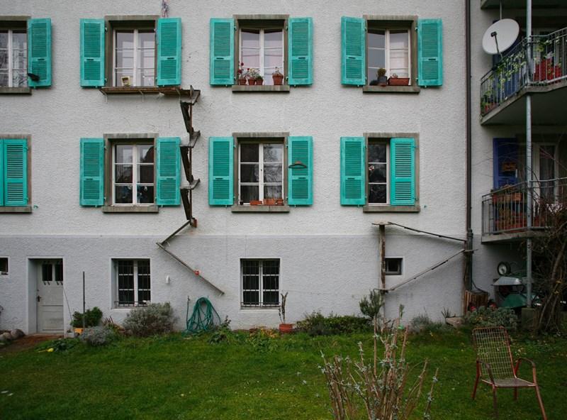 stray cats Switzerland bern ladders Cats - 7905541
