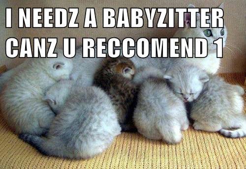 babysitter cute kitten mama