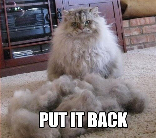 Cats fur naked haircut regret - 7905728512