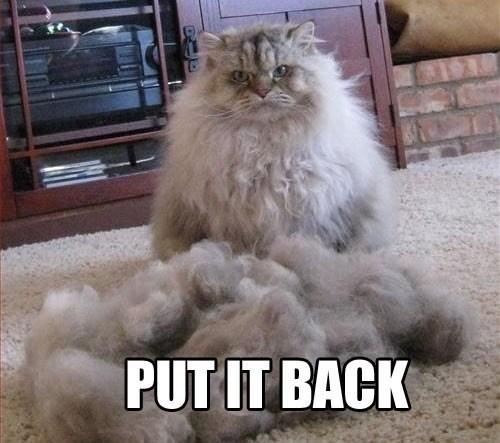 Cats fur naked haircut regret - 7905728512