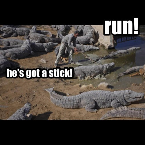 stick,crocodiles,sarcasm