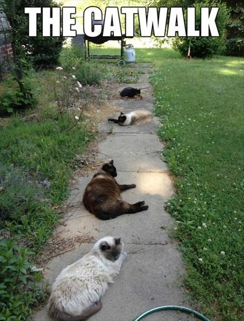 Cats catwalk puns modeling - 7905748224