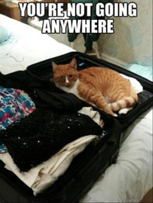 Cats suitcase Travel trapped