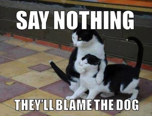 Cats,blame,dogs,say nothing
