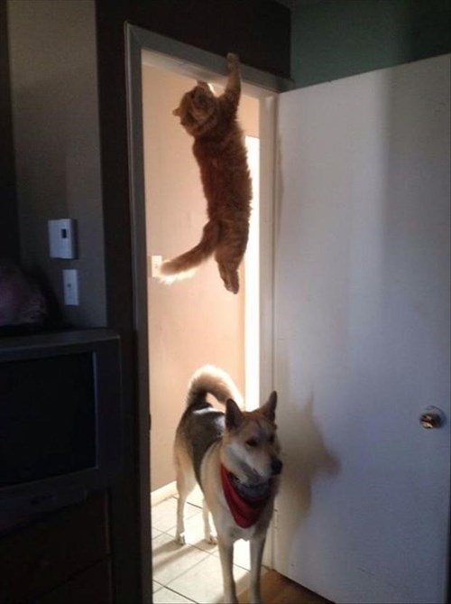 Cats,dogs,doorway,hanging,hiding