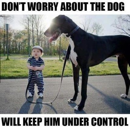 Babies big dogs good dog control - 7905769472