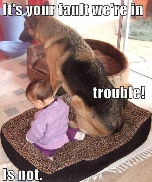 Babies cute dogs in trouble timeout - 7905773824