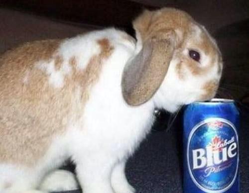 beer crunk critters labatt bunny funny - 7905893888