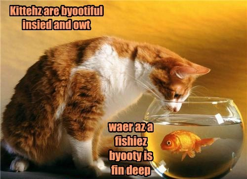 Cats cute fish wisdom lolspeak - 7906518016