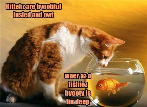 Cats cute fish wisdom lolspeak - 7906518016