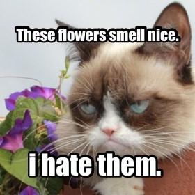 flowers grumpy funeral Grumpy Cat tardar - 7906522112