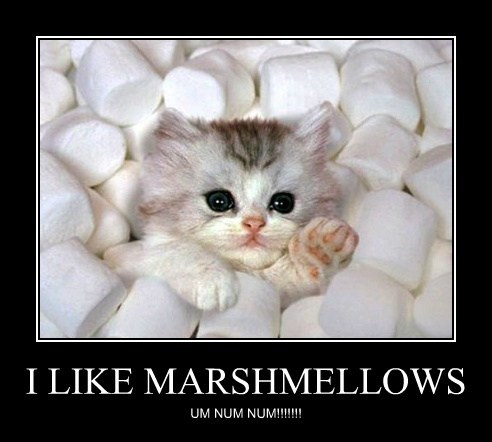 cute marshmallows kitten sweet - 7906642432