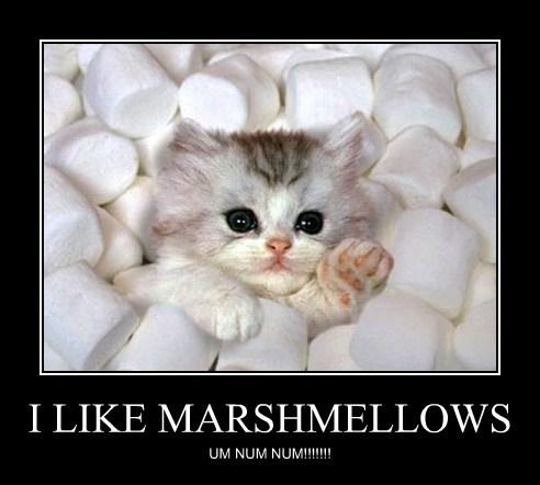 cute marshmallows kitten sweet - 7906642432