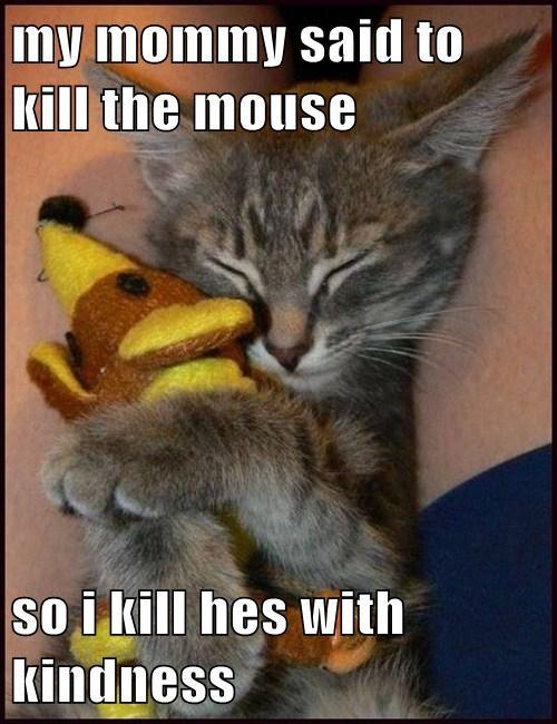 Cats kill mouse kindness - 7906719232
