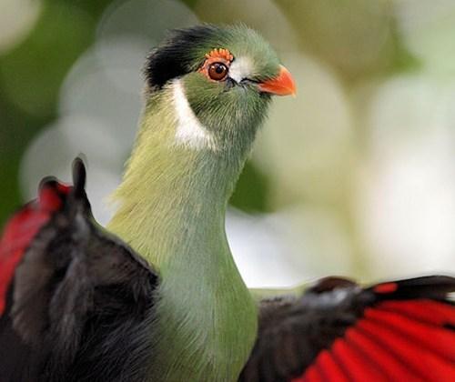 birds exotic squee - 7906782720