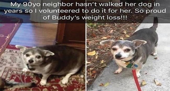 dog belonging to old person gets taken on walks