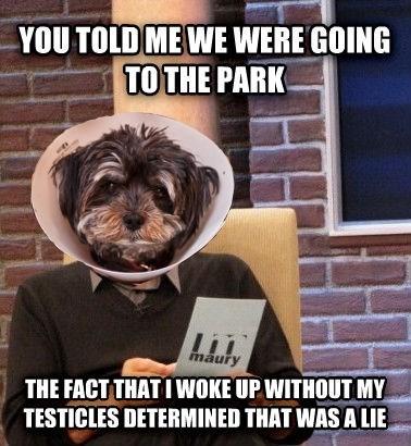 dogs maury Memes
