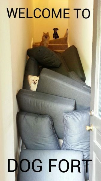 dogs,pillows,cute,cushions,fort