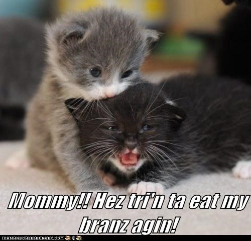 Mommy!! Hez tri'n ta eat my branz agin!