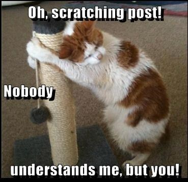Oh, scratching post! Nobody understands me, but you!