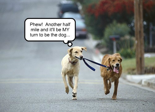 dogs run walk funny - 7908178688