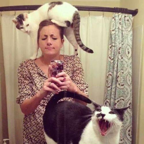 Cats photobomb selfie - 7908185856