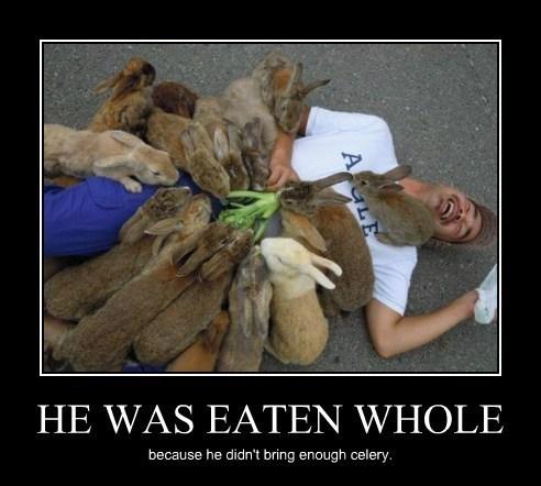 bunnies,eaten alive,funny