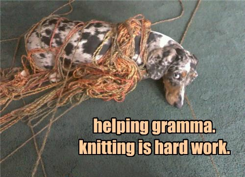 Funny picture of a dog all rolled up in grandma's knitting yarn.