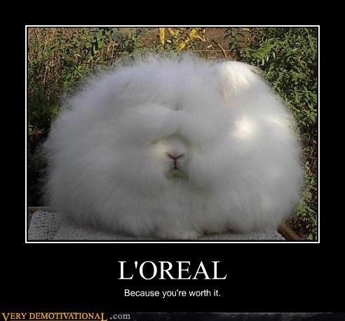 animals bunny hair wtf loreal - 7908372480