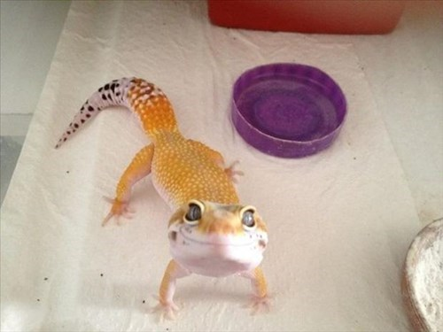 cute lizard smile squee
