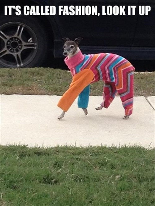 Canidae - IT'S CALLED FASHION, LOOK IT UP