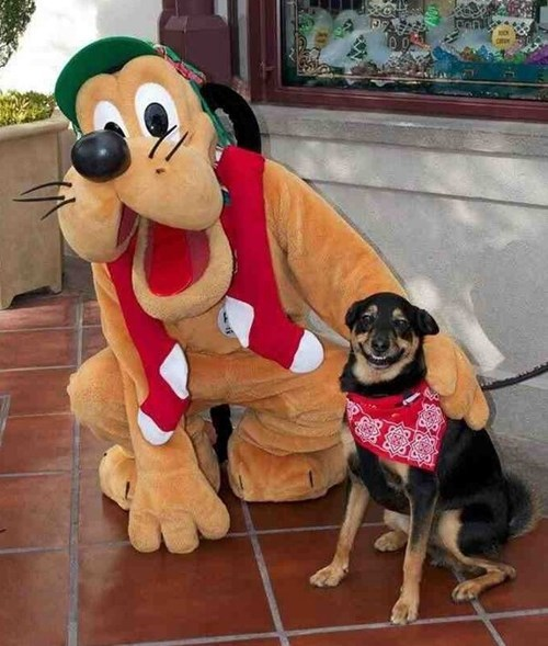 costume dogs disney fan pluto - 7908574208