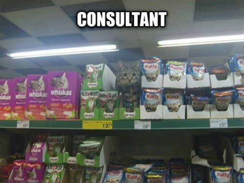 Cats cute consultant store noms - 7908585728
