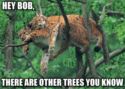 bobcats friends snuggle sleep love trees - 7908589824