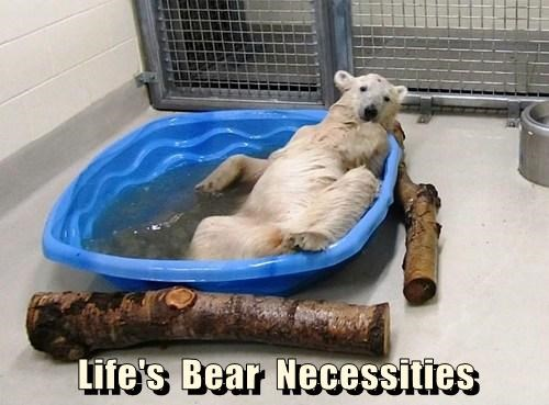 cute,bears,polar bears,swim,puns,necessities,pool