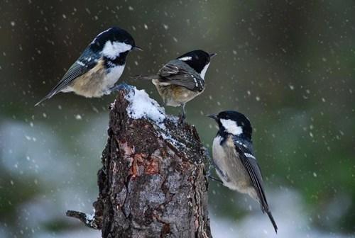 cute birds snow winter - 7908844800