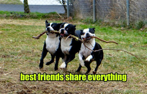 dogs play stick share