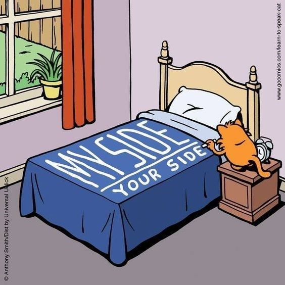 Cats sleeping web comics - 7909381